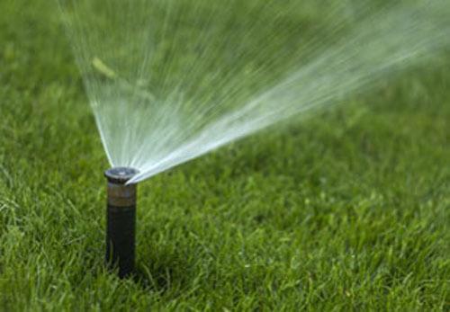 nawadnianie przez firmy ogrodnicze